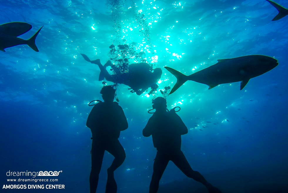 Amorgos Diving Center. Free diving in Greece. Travel Guide of Amorgos