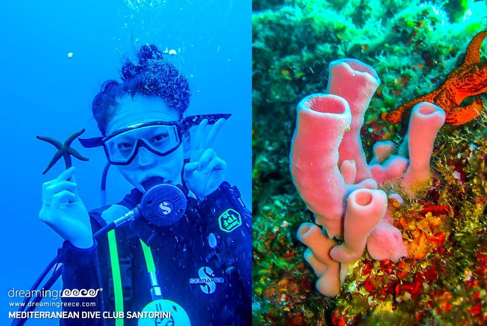 Scuba diving in Santorini Greece. Travel guide of Santorini
