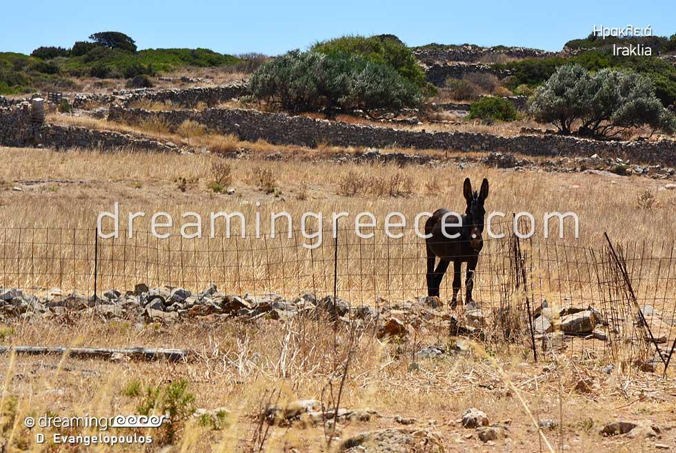 Iraklia island Small Cyclades. Summer Vacations in Greece