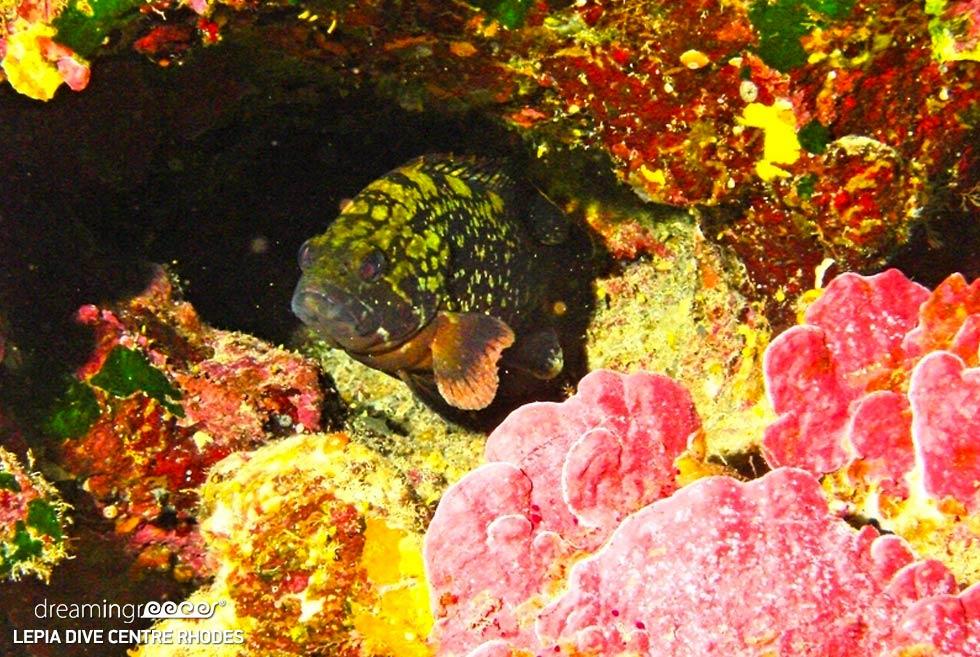 Lepia Dive Centre Rhodes, Scuba diving in Greece