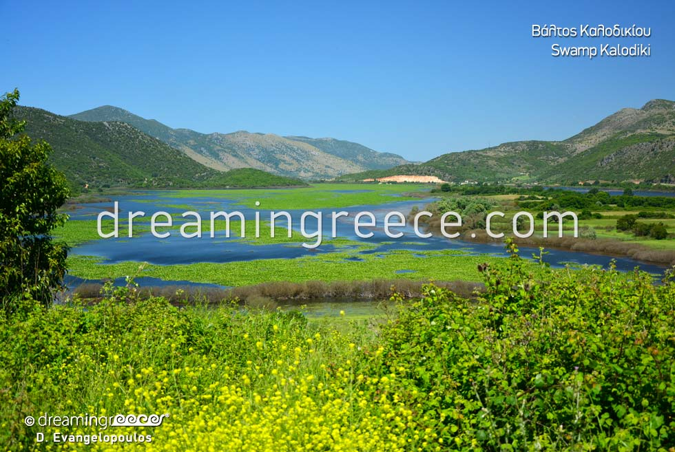 Kalodiki Swamp in Epirus Greece