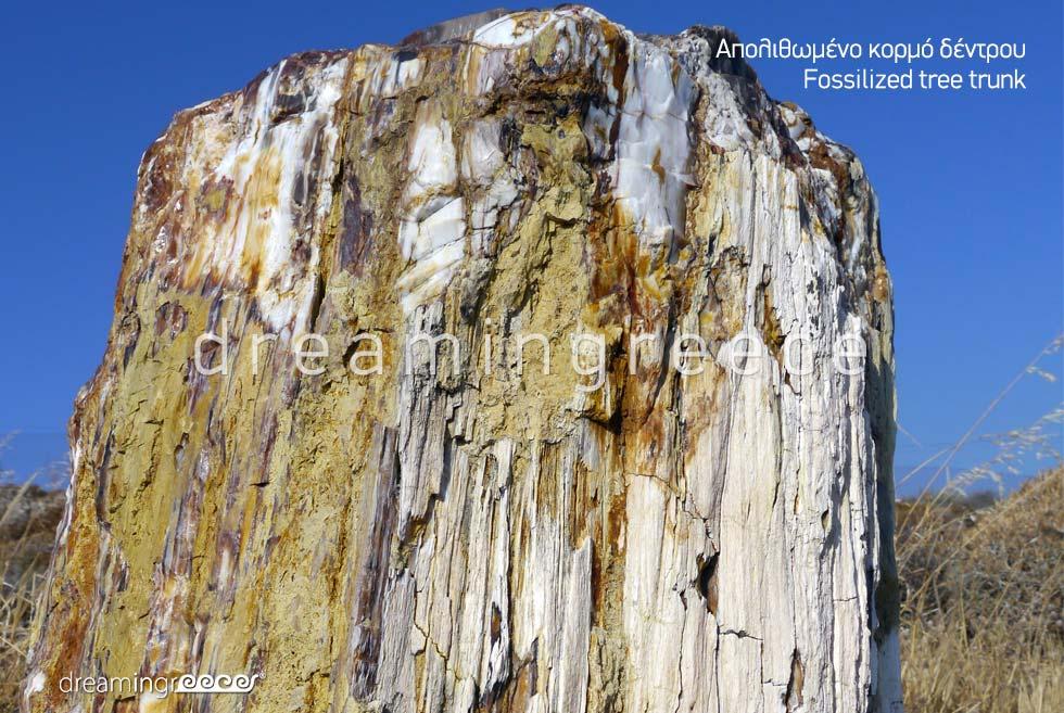 Fossilized tree trunk Lesvos Island Northeastern Aegean Islands Greece