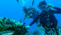 Amorgos Diving Center. Padi diving courses Greece